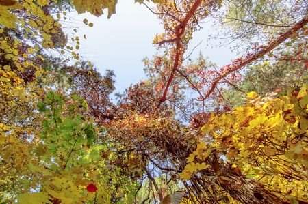 colorful tree branches in sunny forest, autumn natural background photo
