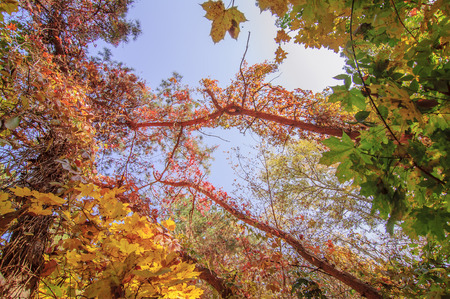 colorful tree branches in sunny forest, autumn natural  photo