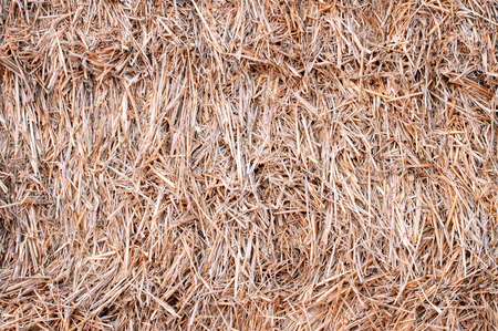 closeup haystack after the harvest of wheat photo