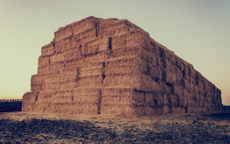 haystack after the harvest of wheat photo