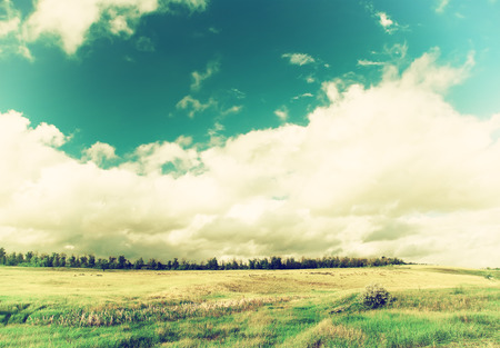 vintage field of grass and trees on horizon with cloudy sky photo