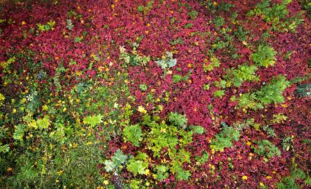 hojas de colores: oto�o de hojas de colores