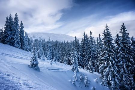 veiw: winter landscape with mountain veiw and fir trees