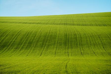 field of green grass. summer landscape