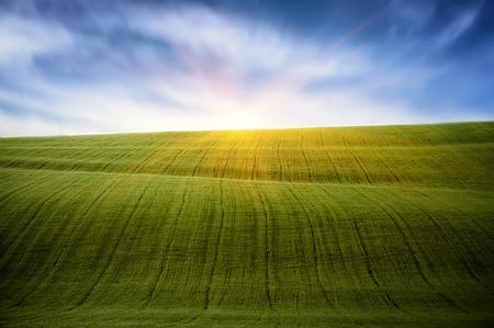 field of green grass. spring landscape