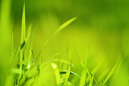 closeup green grass Stock Photo