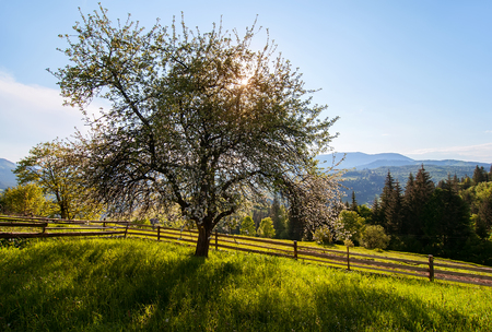 vacant land: rural landscape with tree silhouette, green meadows and mountain view Stock Photo
