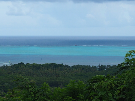 caribe: Look from a hill over palms at the sea