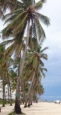 caribe: Palms on the beach