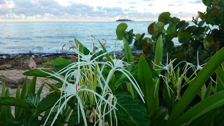 caribe: Unconventional blossom with sea and Iceland in the background