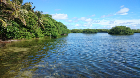 caribe: Green shore with upstream Busch Islands