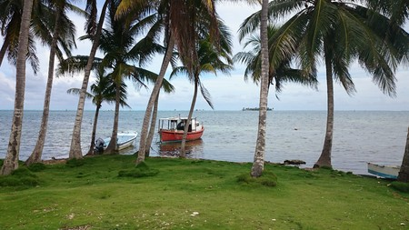 caribe: Green shore with palm trees and red boat