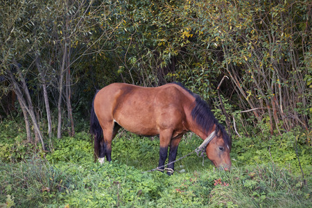 Brown horse in the forest in the clearing