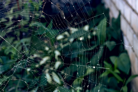 Cobweb on the background of green leaves, beginning of autumn Stok Fotoğraf