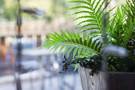 Plant home fern on the windowsill and white light bulbs garlands, copy space Stock fotó