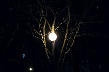 Bright street lamp among tree branches in the dark close up