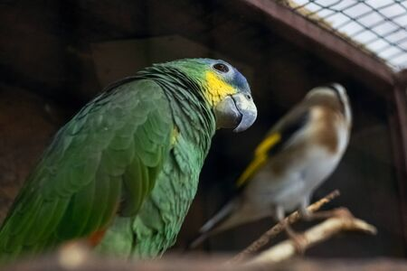 Green parrot in a cage close up portrait