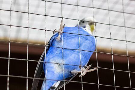 Blue bird on a cell grate close up Фото со стока
