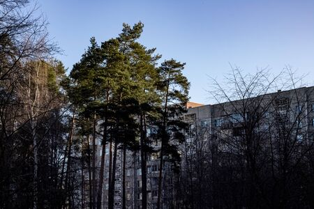 Pine trees in the yard and a tall old residential building in the sunlight 写真素材