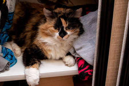 Fluffy cat lies in the closet on clothes
