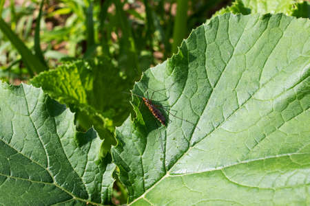 Large winged insect on a green leaf close up
