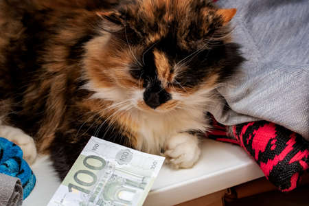 Fluffy cat holds a euro bill close up 스톡 콘텐츠