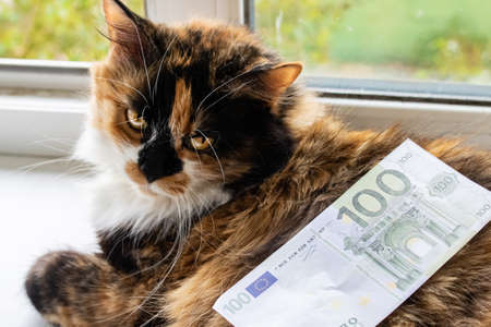 Fluffy cat and a euro bill closeup