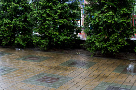 Tiles and neat green bushes in yard