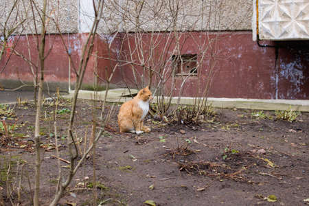 Ginger cat sits among the autumn bare bushes