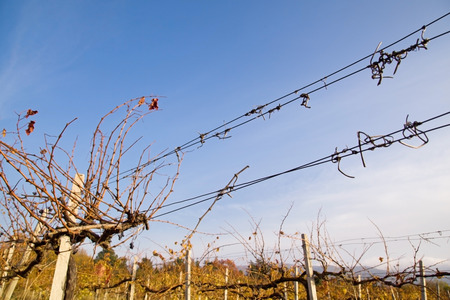 Barbed wire in a vineyard on background sky