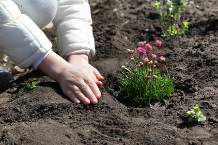 Hands of the child with tenderness, planted into the land a beautiful flower