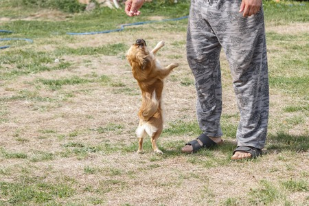The boss threw food on his dog and the dog jumped to catch it.