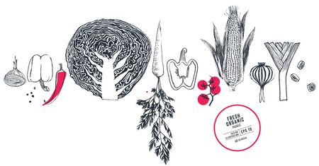 Fresh organic food vector illustration drawn with dry brush and ink
