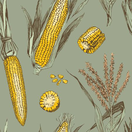 Corn on the cob vintage design seamless pattern. Botanical corn. Vector illustration. Maize