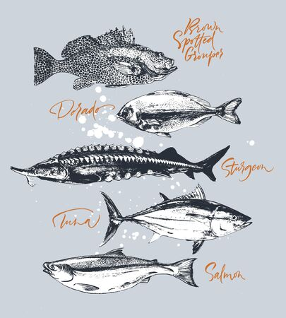 Tre pesci delicati. Tonno, salmone, cernia maculata, storione, dorado. Disegnato a mano con pennello e inchiostro delizioso pasto illustrazione vettoriale