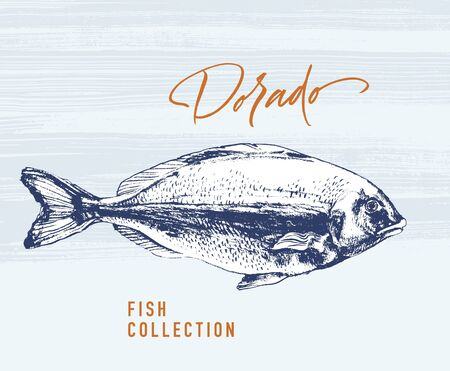 Delicates fish. Dorado. Hand drawn with brush and ink. Delicious meal vector illustration