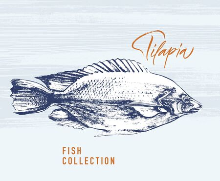 Delicates fish. Tilapia. Hand drawn with brush and ink. Delicious meal vector illustration