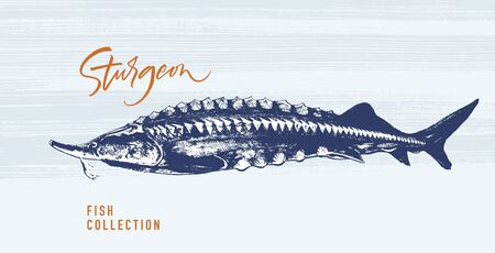 Delicates fish. Sturgeon. Hand drawn with brush and ink. Delicious meal vector illustration