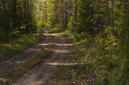 earth road: Strada di terra nella foresta di estate