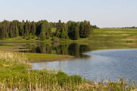 A small pond near the forest in summer photo