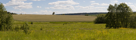 lone  tree: Summer landscape with a lone tree, panorama Stock Photo