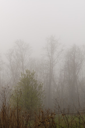 turbidity: Trees in the fog silhouette Stock Photo