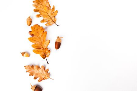 Autumn fall leaves from trees, rose hip. flat lay, top view. Composition for your design.
