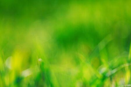 Sunny abstract green nature background, selective focus. Hello summer Archivio Fotografico