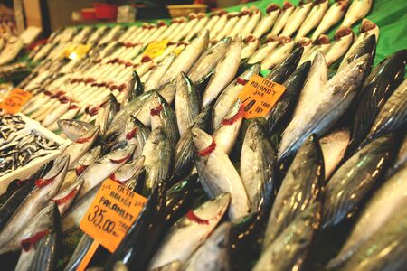 Fresh fish at the fish market in Turkey, different types of seafood