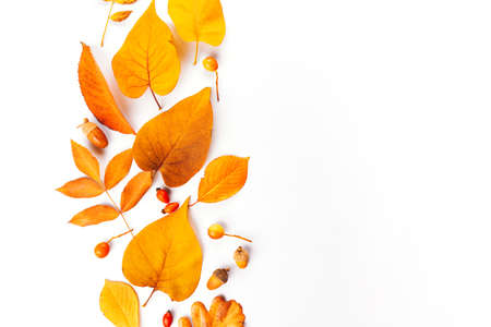 autumn leaves and fruits and berries on a white background, hello autumn, layout for design with place for text