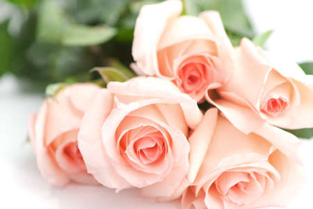 Bouquet of perfect pink roses for an anniversary or Valentine on a white background