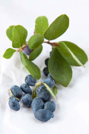 Honeysuckle leaves and berries from the sweetberry honeysuckle vine, lonicera caerulea, used as a colourant and flavouring in processed products