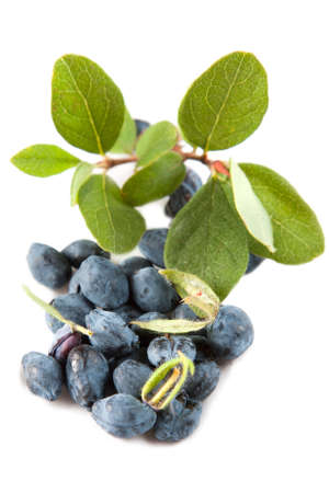 Honeysuckle leaves and berries from the sweetberry honeysuckle vine, lonicera caerulea, used as a colourant and flavouring in processed products such as preserves, icecream and even occasionally wine
