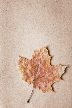 Dried leaf border in soft pastel shades and a variety of shapes on textured paper with copyspace
